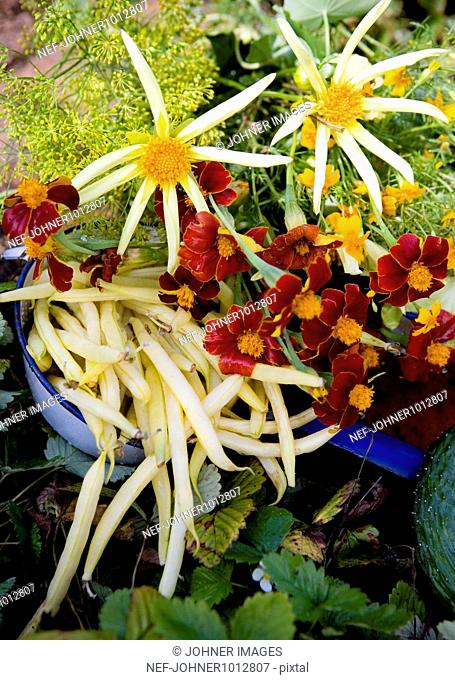 Variety of flowers and vegetables