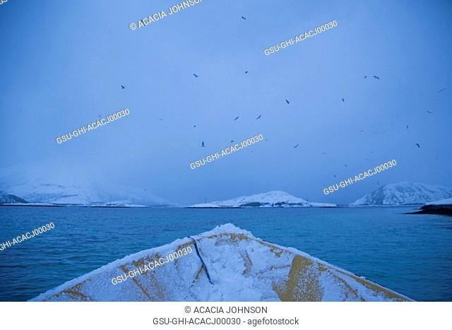 Bow of Snowy Boat with Turquoise Water and Birds, Norway