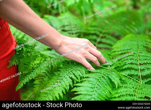Female hand, with long graceful fingers gently touches the plant, leaves of fern. Close-up shot of unrecognizable person. . High quality photo