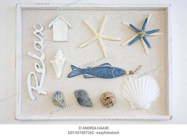 maritime still life with natural and decoration objects in a wooden box with sand