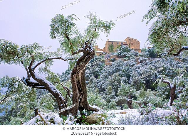 Son Rullan country estate and olive trees after a Winter snowfall. Deia area. Tramuntana mountains. Majorca, Balearic islands, Spain