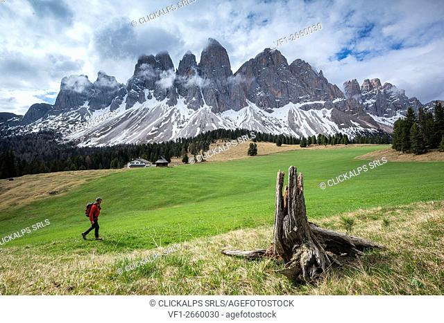 Funes Valley, Dolomites, South Tyrol, Italy. View from Malga Glatsch to the peaks of the Odle