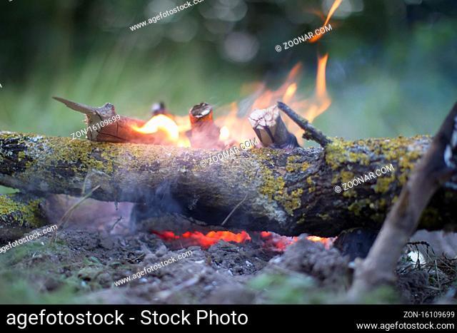 The fire. Log wood on fire
