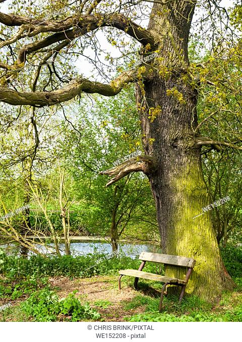 Old bench under oak tree next to canal in Cheshire countryside, England, UK