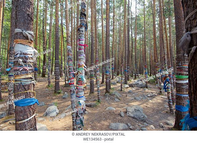 sacred grove, Arshan, Tunkinsky District, Republic of Buryatia, Siberia, Russian Federation