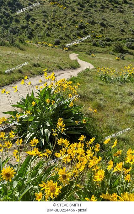 Yellow flowers and dirt path in rolling landscape