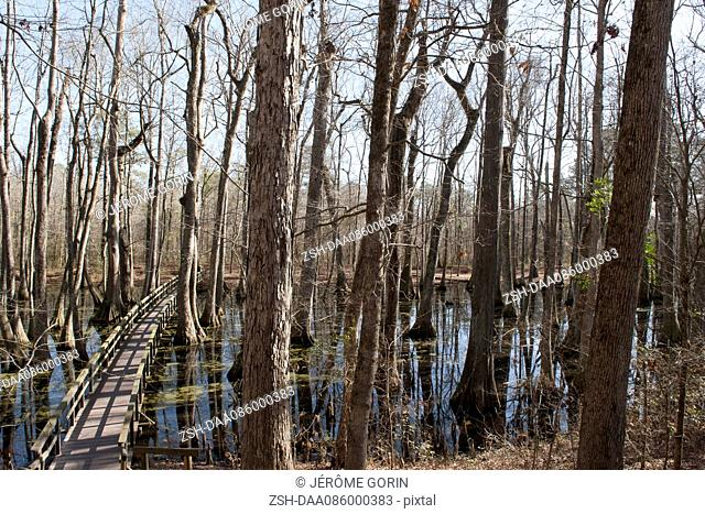 Footbridge through swamp