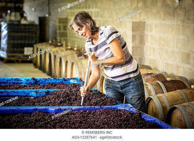 Wine maker punching down the cap on wine grapes fermenting for red wine; Paarl, Western Cape, South Africa