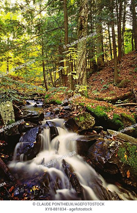Forest-and-Stream