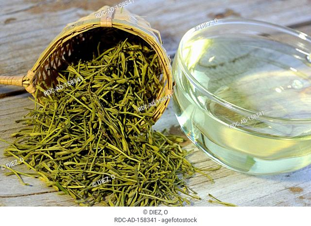 Cup of Jin Yin Hua tea Lonicera caprifolium Lonicera japonica Goat's Leaf Jinyinhua