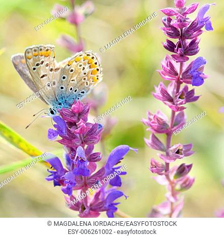 butterfly on pink flower design on natural background