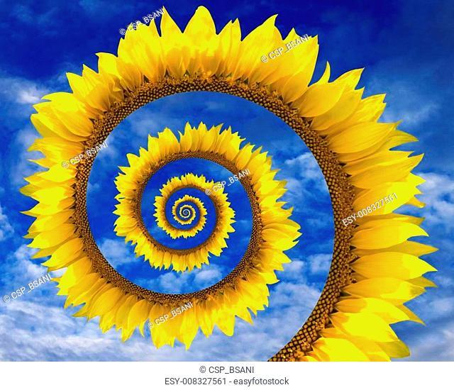 Abstract sunflower spiral