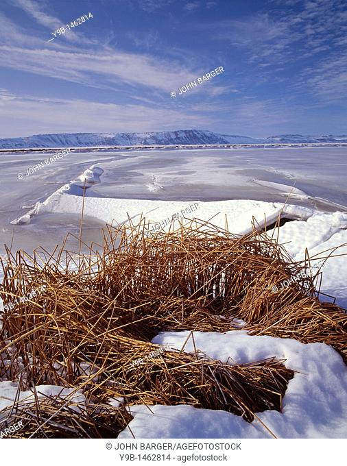 Cat-tails and frozen surface of Tule Lake in winter, Tule Lake National Wildlife Refuge, northeast California, USA