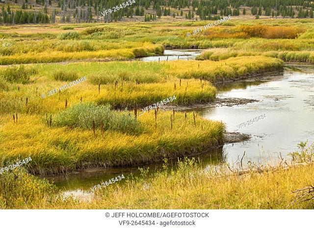Grassy marsh wetlands along Indian Creek, late summer in Yellowstone National Park, Wyoming