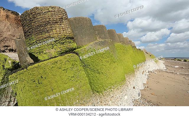 Smashed concrete sea defences at Ulrome near Skipsea on Yorkshires East Coast, UK. The sea has eroded past the barriers and left them stranded further down the...