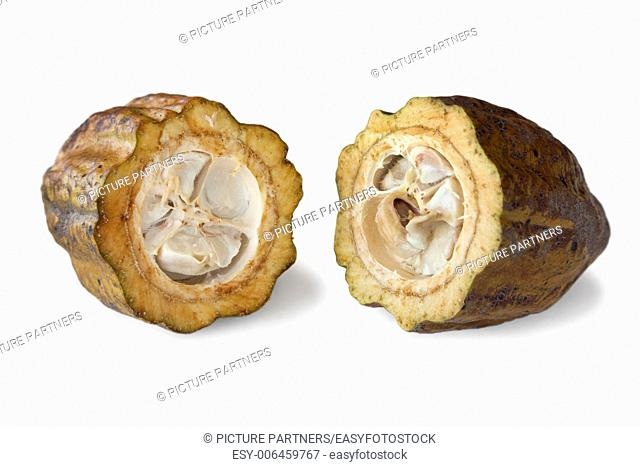 Cocoa beans in a cacao pod on white background
