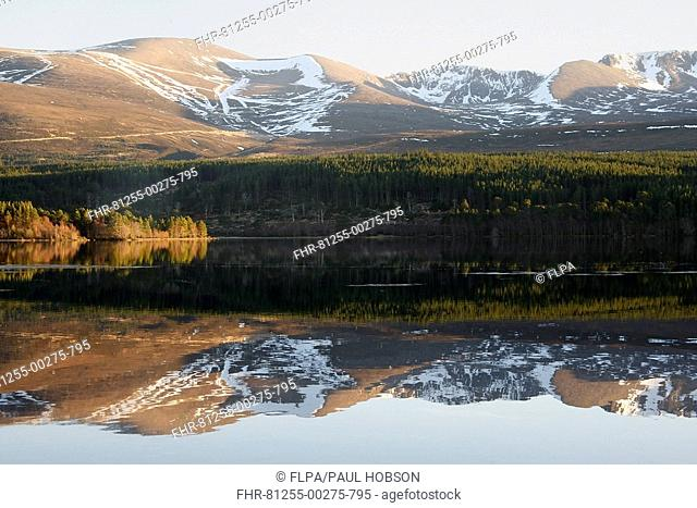 Mountains and trees reflected in freshwater loch, Loch Morlich, Glenmore Forest Park, Cairngorms, Highlands, Scotland