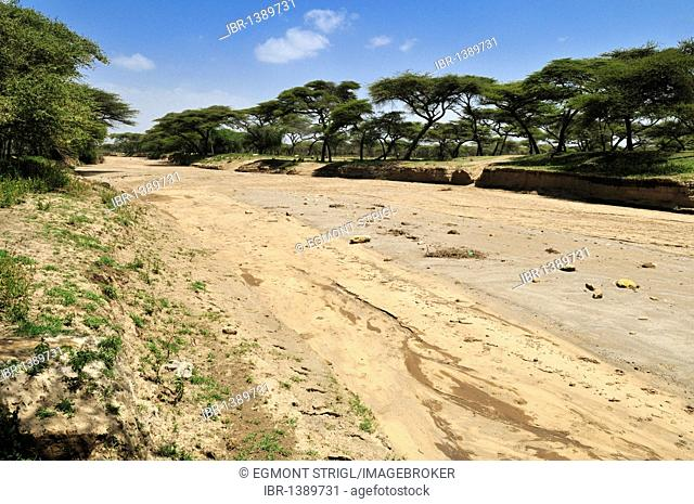 Dry riverbed in an acacia forest, Rift Valley, Oromia, Ethiopia, Africa