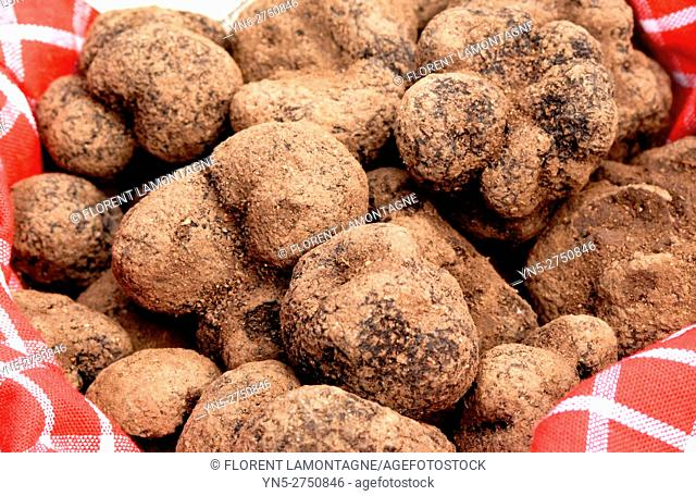 Traditional french Truffles' market in Lalbenque, in Perigord, France