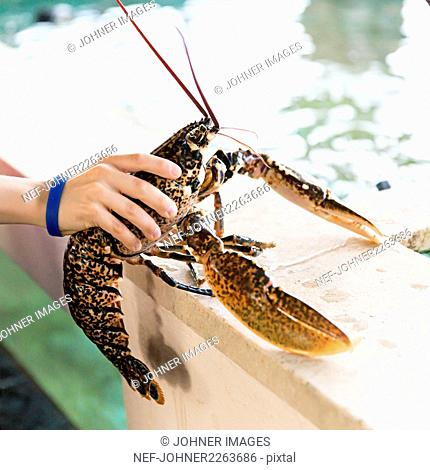 Boys hand holding lobster