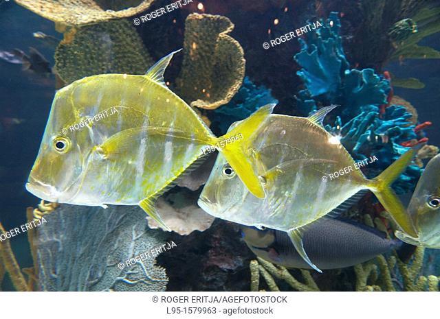Tropical fish species maintained in sea aquarium, Anaheim, US