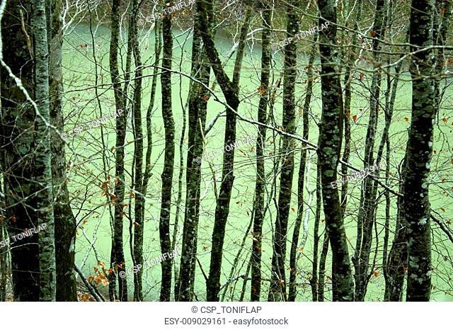 River in Jungle of Irati. Navarre