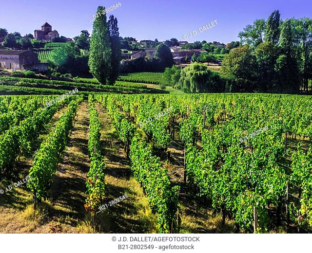 "France, Aquitaine, Gironde. """"Montagne Saint Emilion"""", one of the famed Bordeaux wunes district"