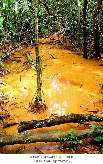 Flood plain inside the Amazon forest, Acre, Brazil, 2008