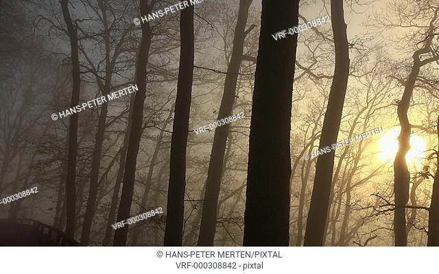 Fog in woodland