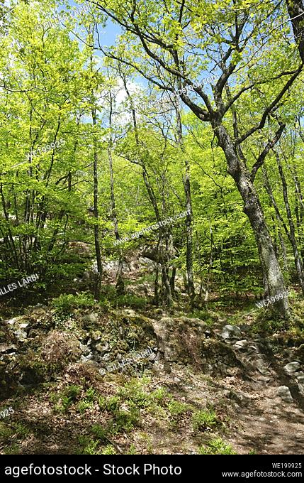 Forest and rocs in Brittany