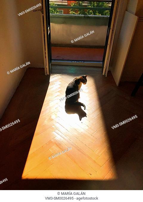 Cat sunbathing by the open window