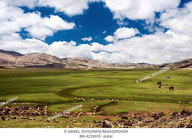 Plateau with horses and mules, Ifrane, High Atlas, Morocco