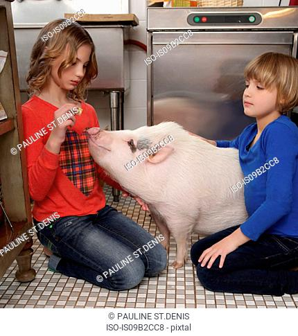 Two young girls in kitchen, feeding pet pig
