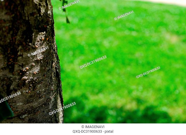 Tree trunk and Lawn