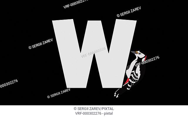letter, W, English, Woodpecker