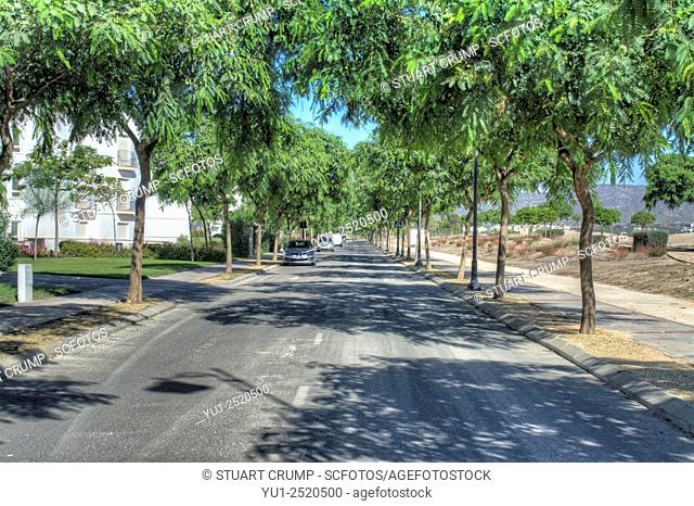 Tree lined shady road around the Hacienda Riquelme Golf Resort, Murcia, Spain