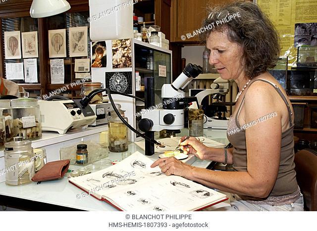 France, Paris, Museum National d'Histoire Naturelle, Arachnology Laboratory, Christine Rollard, teacher-researcher arachnologist
