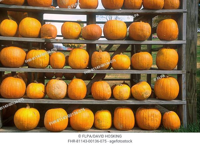 Tennessee Pumpkin harvest store - Great Smoky Mountains, Tennessee, USA