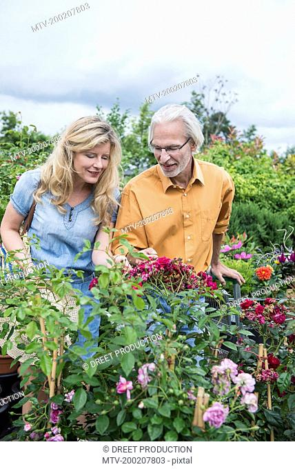Mature couple choosing plants in a plant nursery, Augsburg, Bavaria, Germany