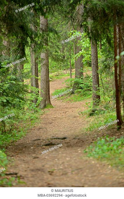 Landscape, forest path, forest