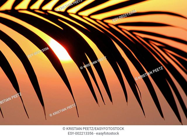 Beautiful shot of a palm tree infront of the sun in south-america  Focus is on the palm and the colours are very hot and soft  Some colour blurring in the top...