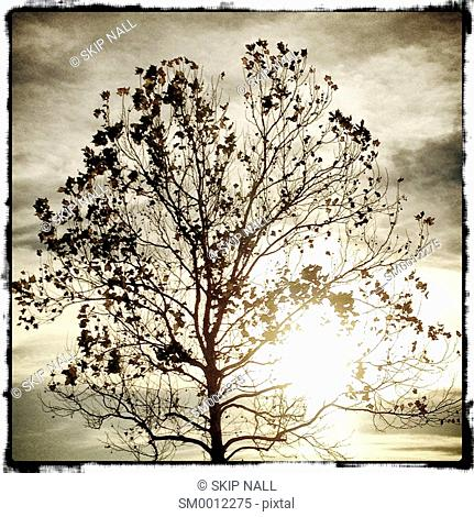 The silhouette of a tree against a cloudy bright sky