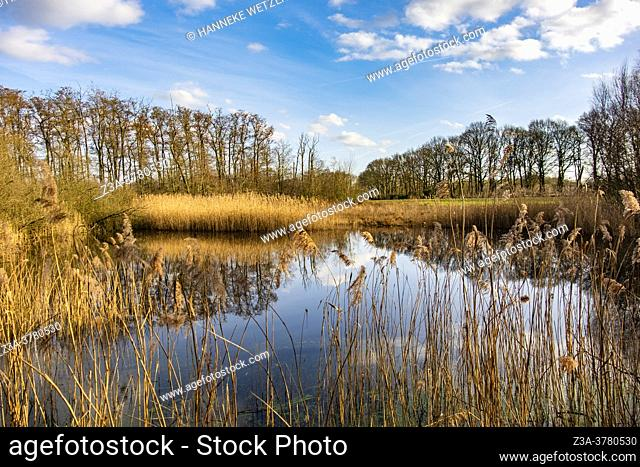 Water in a Dutch forest, Europe