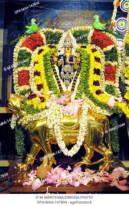 Decorated golden Ganesha mounted on gold mooshika mouse vahanam during Ganesh festival in Sri Karpaga vinayagar Ganesha temple in Pillaiyarpatti ; Tamil Nadu ;...