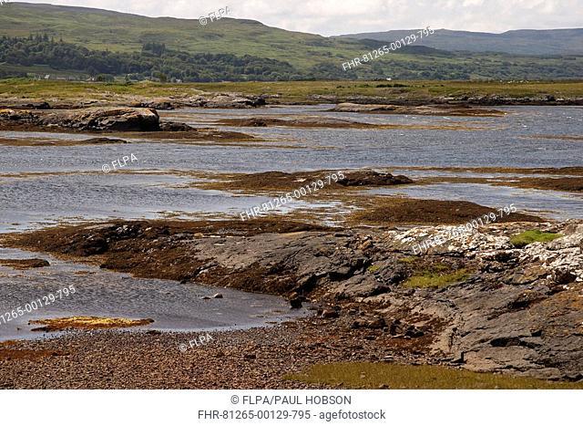 View of sea inlet habitat, Loch Beg, Isle of Mull, Inner Hebrides, Scotland