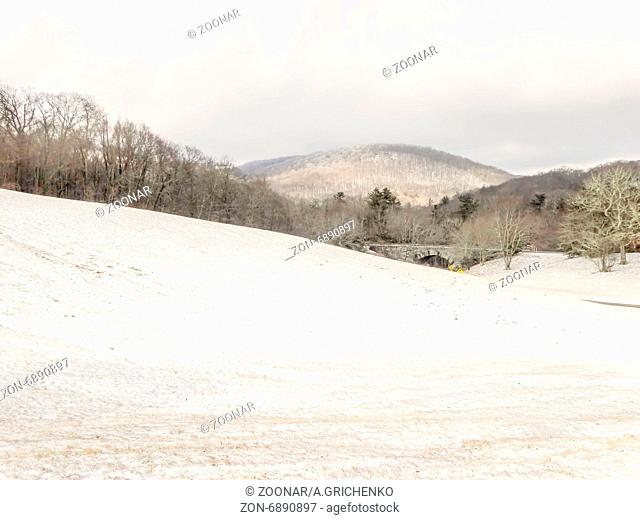 snowy forest landscape during winter