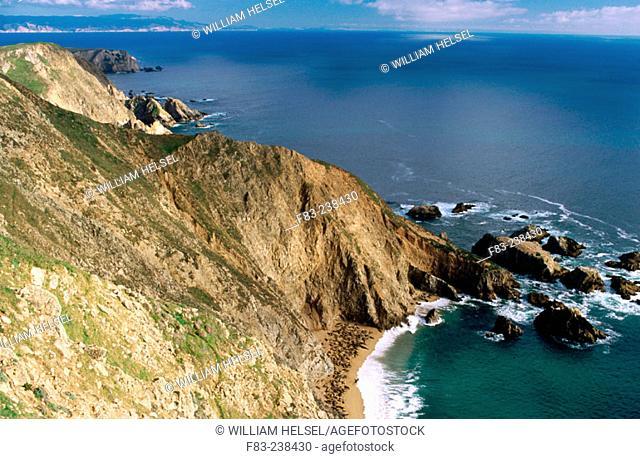 Beach covered with Elephant Seals (Mirounga angustirostris). Point Reyes National Seashore. California. USA
