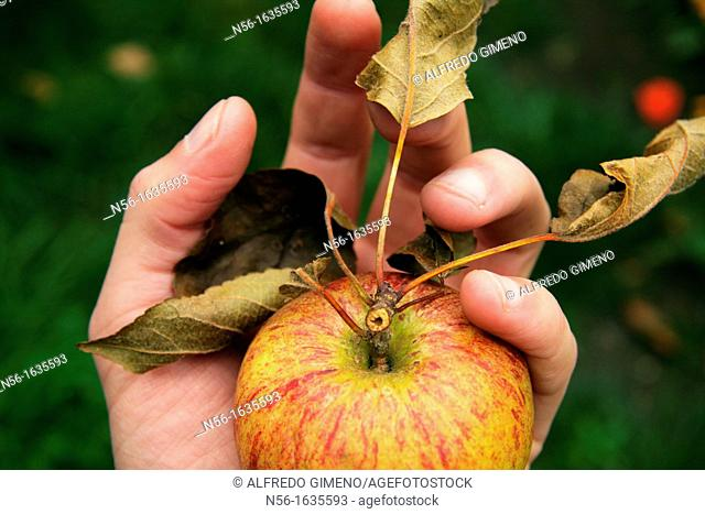 HAND HOLDING A RED APPLE