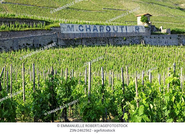 Vineyard, French wine, wine industry , Chapoutier Hermitage wine, Tain l'hermitage, Drome, Rhone ALpes, Rhone Valley, France, Europe