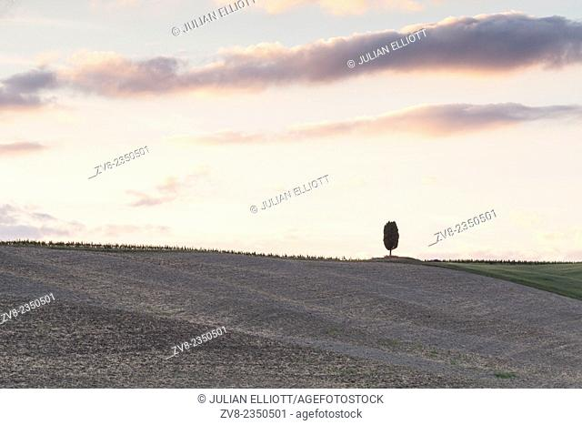 A lone cypress tree in the Tuscany countryside